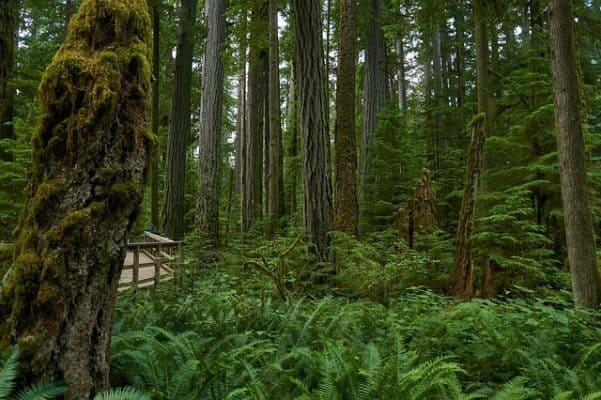 Oregon Rainforest